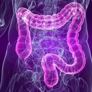 Digestive & Probiotic Health
